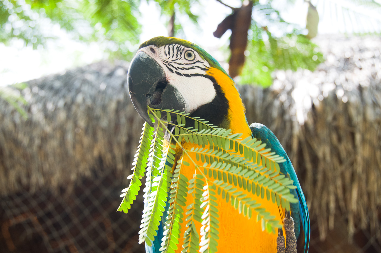 coolestparrotever